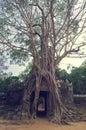 Banyan tree over the door from Ta Som. Angkor Wat Royalty Free Stock Photo