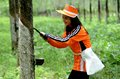 Banyuwangi indonesia november tapping the sap of the rubber tree in glanmor plantation east java indonesia photo taken Stock Photography