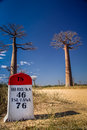 Baobab road Royalty Free Stock Photos