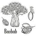 Baobab Tree, Fruit, Leaf, Nut ...