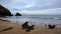 Barafundle bay beach with remains of ship on national trust in pembrokeshire wales Stock Photography