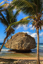 Barbados beach beautiful bathsheba in with huge coral rock Royalty Free Stock Photography