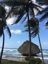 Barbados beach with palm trees and large rock Royalty Free Stock Photo