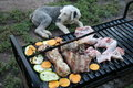 Barbecue and dog Royalty Free Stock Images