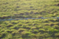 Barbed field a single slither of wire guards a the sunlit behind is the only warmth in the photograph Royalty Free Stock Image
