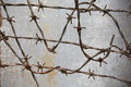 Barbed wire against the wall in the prison Royalty Free Stock Photo