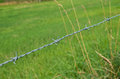 Barbed wire around a green field Royalty Free Stock Images