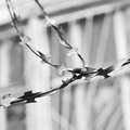 Barbed wire black and white Royalty Free Stock Photo