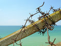 Barbed wire and blue sea Royalty Free Stock Images