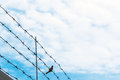 Barbed wire on blue sky with bird on wire, concept of freedom Royalty Free Stock Photo