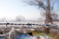 Barbed wire close up on with countryside on the background freedom protection and also prison danger concept Stock Photo
