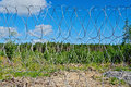 Barbed wire fence with blue sky on a background of white clouds green trees yellow soil and gravel Royalty Free Stock Photo