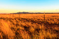 Barbed wire fence this image of a was captured in new mexico not far from santa fe the sun was setting giving a nice golden glow Royalty Free Stock Photo