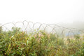 Barbed wire fence old at thai myanmar border Royalty Free Stock Image