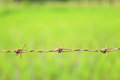 Barbed wire on green background Stock Photography