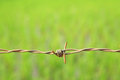 Barbed wire on green background Royalty Free Stock Photography