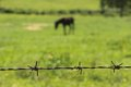 Barbed wire and horse with s hair blurred in background Stock Photography