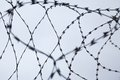 Barbed wire interlaced over grey sky background Stock Photography