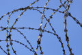 Barbed wire in prison Royalty Free Stock Photography
