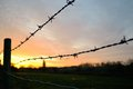 Barbed wire at sunrise Royalty Free Stock Image