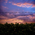 Barbed wire and sunset Royalty Free Stock Photography