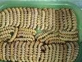 Bardy maggot Royalty Free Stock Photo