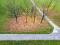 Bare autumn trees in park aerial view of with leaves scattered on grass Royalty Free Stock Photos
