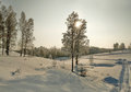 Bare birches in deep snow on the winter slope at evening Royalty Free Stock Photo