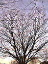 Bare branched tree Stock Photography