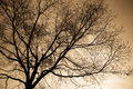 Bare Branches Royalty Free Stock Image