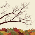Bare Branches with Fallen Leaves Royalty Free Stock Photo