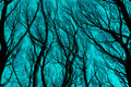 Bare branches silhouette against cyan blue sky.