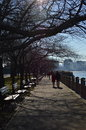 Bare branches of trees in sunny day in Hudson River Greenway Royalty Free Stock Photo