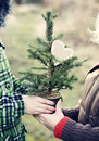 Bare Christmas tree Royalty Free Stock Photography