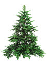 Bare Christmas tree Royalty Free Stock Photo
