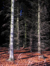 Bare forest trees Royalty Free Stock Photo