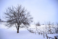 Bare frozen tree in snowy winter field under blue sky stormy Stock Photos