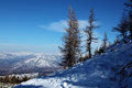 Bare larches in altai's mountains at winter Royalty Free Stock Photos
