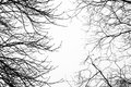 Bare leafless tree branches with white sky behind