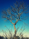 Bare tree Stock Photos