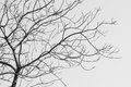 Bare Tree in Black and White Royalty Free Stock Photo