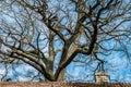 Bare tree blue sky Royalty Free Stock Photo