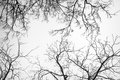 Bare tree branches white pale sky Stock Photo