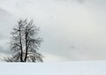 Bare tree without midfield sheet of snow in the mountains Royalty Free Stock Images