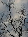 Bare tree and sky Royalty Free Stock Photo