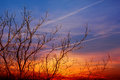 Bare tree at sunset Royalty Free Stock Photography