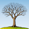 Bare tree (vector) Royalty Free Stock Images