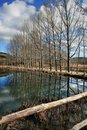 Bare trees reflecting on lake Stock Photography