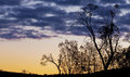 Bare trees silhouettes at sunset murray national park victoria australia Stock Images