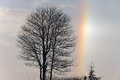 Bare Trees and Sundog Royalty Free Stock Image